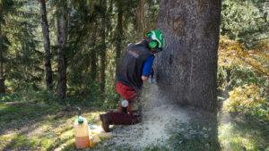 Baumpflege & Baumberatung aus Vorarlberg. Forstarbeiten, Baumpflege & Baumberatung, Baumfällung, Helikopterfällung, Industriekletterarbeiten, Baumgutachten, Trassenfreihaltung, Felsräumarbeiten und Demontage von Seilbahn-Stützen.