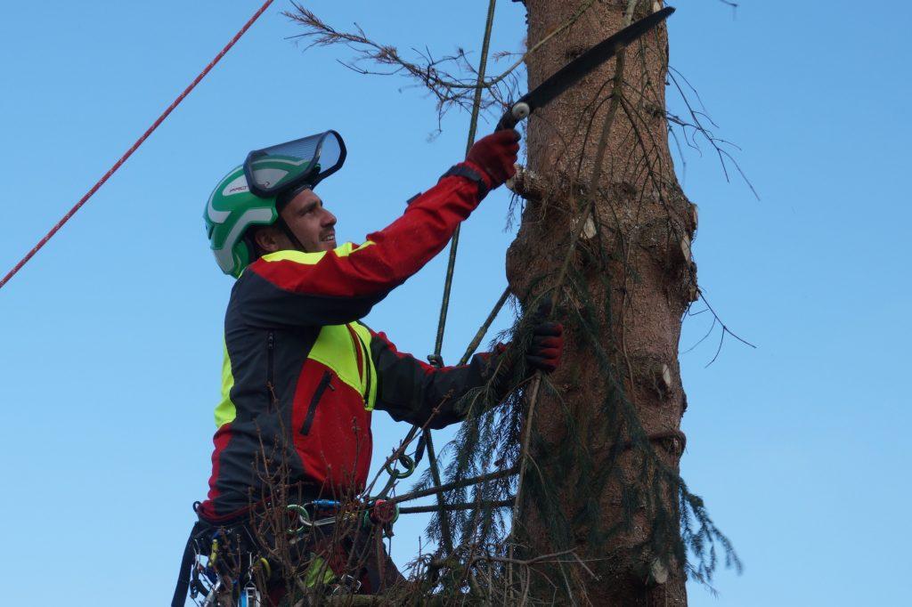 Baumfällung Kranfällung Wurzelstockfräsen Abtransport Baum Fällen
