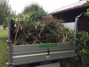 Baumpflege in Frastanz