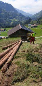 Holzrücken, Holz Rücken, Pferde Rücken, Holzrücken Vorarlberg, Holzschlägerung, Holzfällung, Bodenzug, Holz liefern