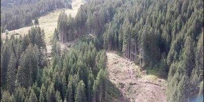 Rodungsarbeiten Piste 60 - Montafon ,Vorarlberg, Rodungsarbeiten, Forstarbeiten, Spezial Einsätze im Forstbereich, Skitourismus